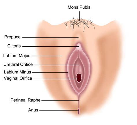 gynecology inside vagina pics jpg 800x734